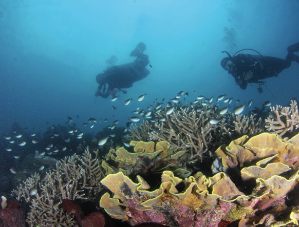 Scuba divers at Maasim Reef in Sarangani by Iggy Tadlip